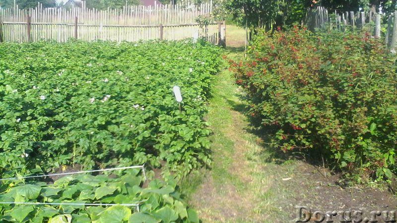 Продается земельный участок 10 соток в Калужской области - Земельные участки - Продается участок 10..., фото 3